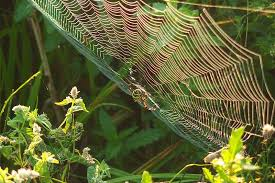 """When spider webs unite, they can tie up a lion."" – African Proverb"